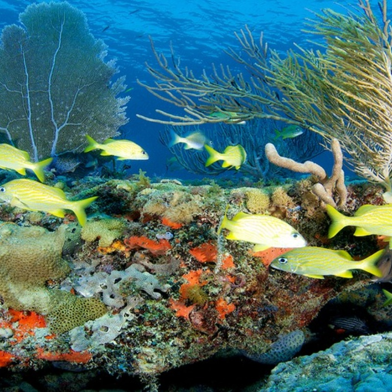 The coral reefs of Biscayne