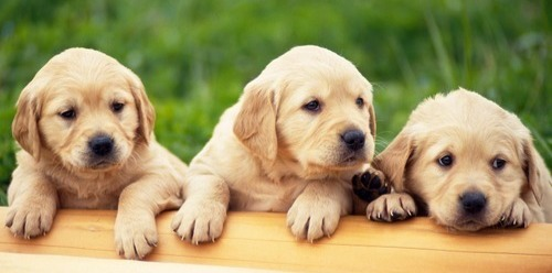 Photo of the puppies!